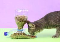 tái chế chai nhựa đựng thức ăn